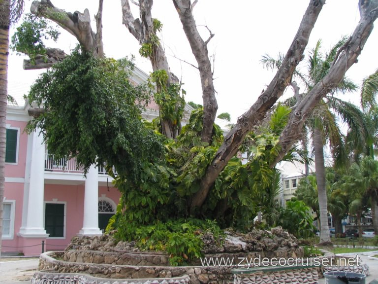 Supreme Court behind a tree that has survived much, Nassau, Bahamas